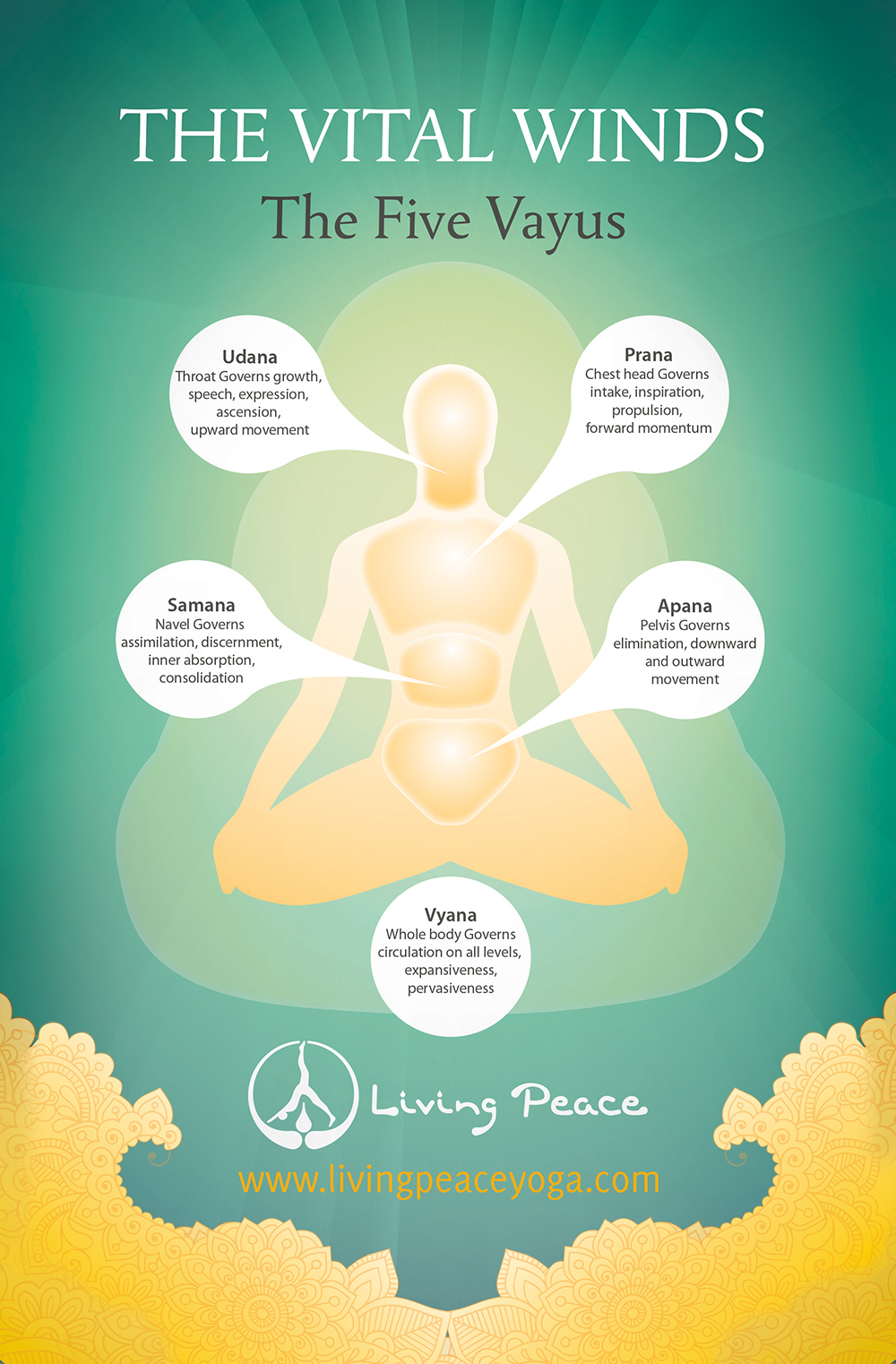 yogic anatomy vayus poster living peace yoga