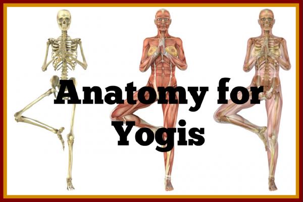 Anatomy for Yogis - Living Peace Yoga